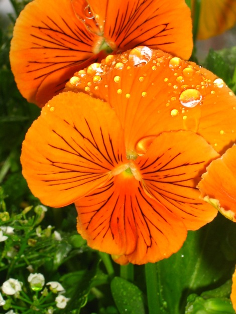 Blommor är vsckra även en regnig dag