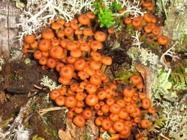 Den här svampen är bara fin att titta på. Inte att äta