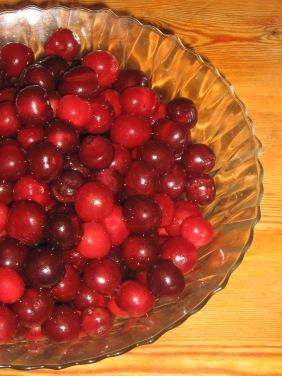 Prunus cerasus / Surkörsbär