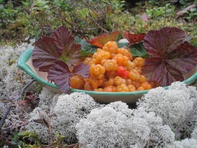Hjortron / Rubus chamaemorus