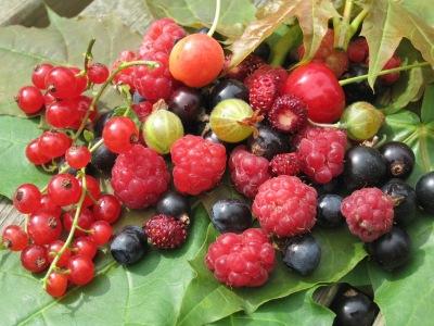Hallon, Blåbär, Körsbär, Röda och Svarta Vinbär, Smultron, Krusbär