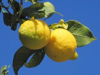 Citroner