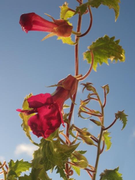 Sommarens sista blommor på balkongen