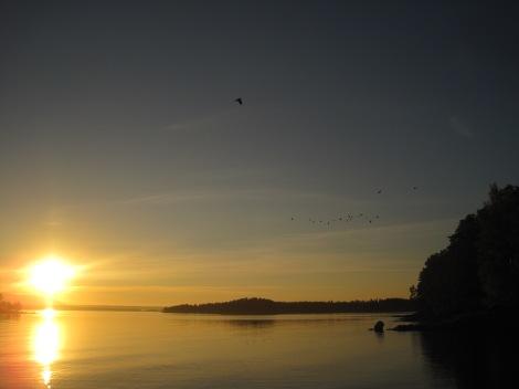 Utsikt från Tivars Gårdsmejeri mot Verkön