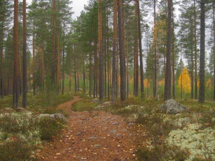 Min barndoms skogsstigar