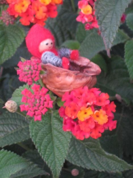 Tomten tycker också om det rödgröna, här med sin favoritblomma, eldkrona...