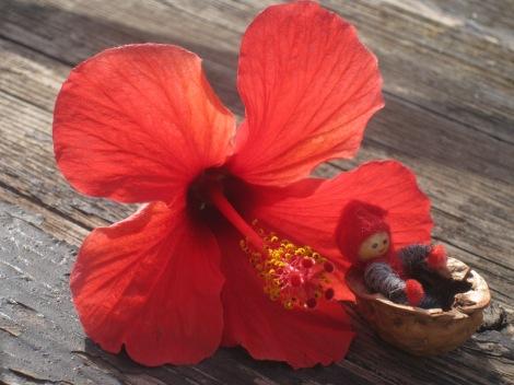 Tomten njuter av de vackra blommorna i Alanyas parker...