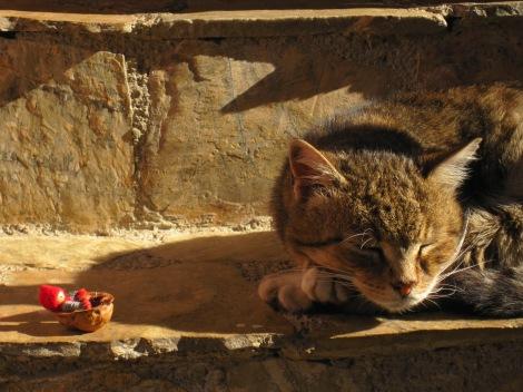 Tomten med katt