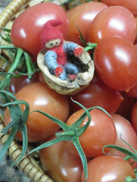 Tomten gillar solmogna små tomater inköpta på Fredagsmarknaden...