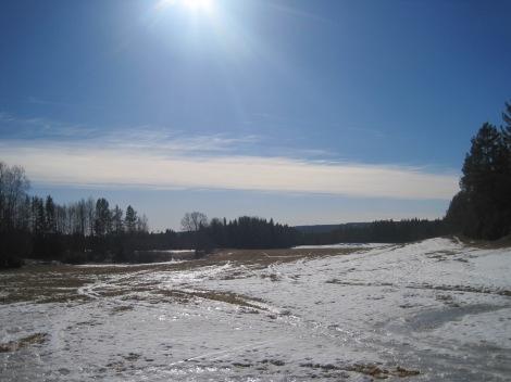 Jämtländsk skogsäng i mars