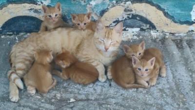 Katter i Makrigialos