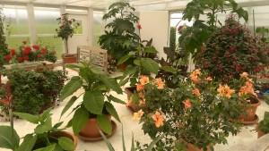 Växthuset på Jordgubbslandet, Rödön