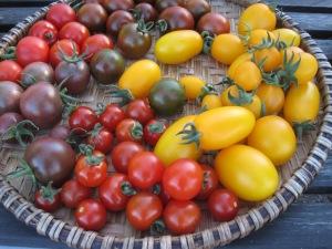 Tomater från Svens Trädgård, Gnesta