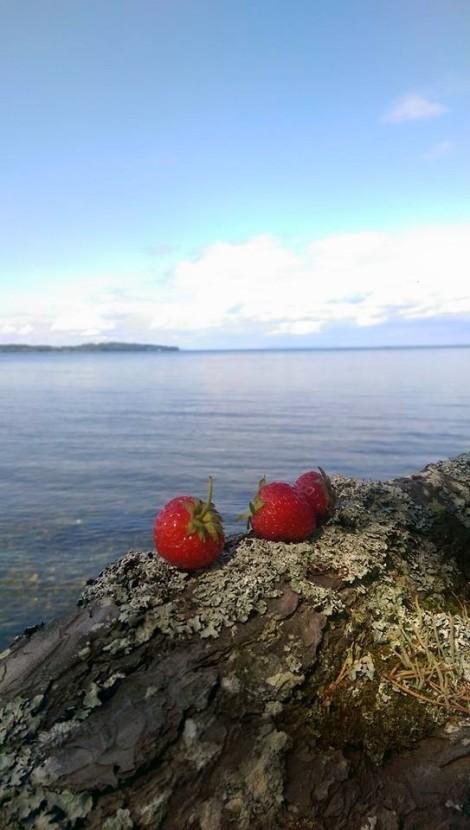 Picknick med jordgubbar