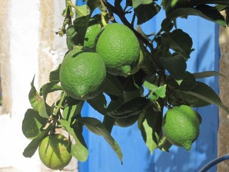 Små citroner gröna...