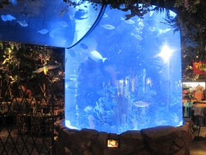 Gigantiska akvarier på Rainforest Café...