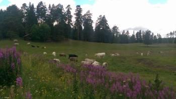 Ett sommarfagert Rödön i Jämtland...