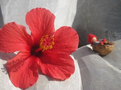 Hibiscus är en av Tomtens favoriter bland det vegetariska...